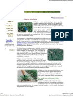 Crabgrass. Controlling and Removal Extremlym