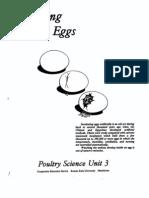 Incubating Eggs