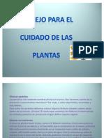 Cuidados de La Planta Dorado Sofia
