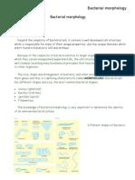 Bacterial Morphology