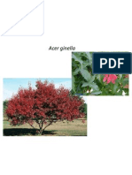 2011 arbre