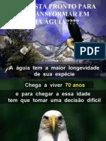 A Vida de uma Águia