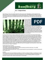 Der Cannabis Anbau Pdf