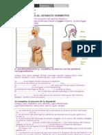 51379450 Ficha Aplicacion Aparato Digestivo