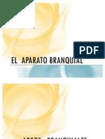 El  aparato Branquial