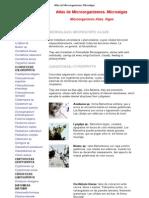 Atlas de Microorganismos Microalgas