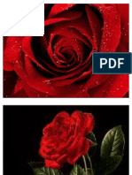 A Red Red Rose by Robert Burns