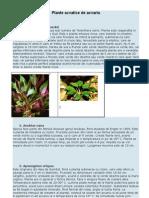 Plante Acvatice de Acvariu