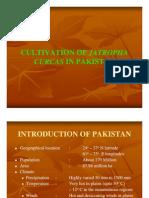Cultivation of Jetropha Curcas in Pakistan