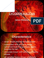 LYCODON AULICUS Janso Kollanur Characteristics • Small, Broad And
