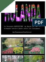 tulipanes_hollandeses