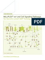MILLIPLEX MAP and Cell Signaling Pathways