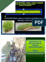 Forraje Verde Hidroponico Fvh