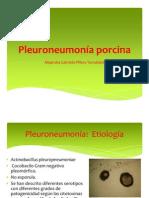 _Pleuroneumonía