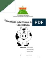 cetosis bovina
