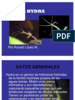 LA HYDRA