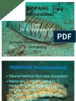 KUL 2 TERIPANG (Holothuroidea)