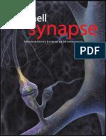 Cornell Synapse 2007