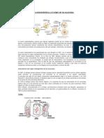 Teoría endosimbiótica y el origen de los eucariotas
