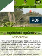 Investigación de Mercado de Aves para Guatemala