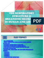 The Respiratory Structure & Breathing Mechanism in Human