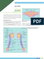 Anatomia + Circulação