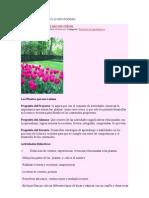 Proyecto Las Plantas Que Nos Rodean