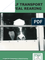 Uk Calf Transport and Veal Rearing
