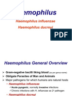 Haemophilus Etc, Yersinia Etc.
