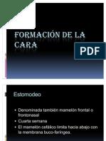 FORMACIÓN DE LA CARA