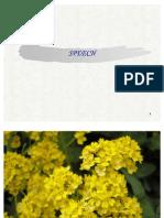 Speech Seminar - Copy