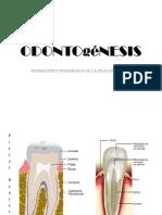 Odontogenesis 1
