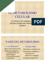 EL_METABOLISMO_CELULAR