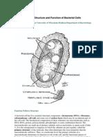 Bab 6 Sruktur Dan Fungsi Sel Bakteria ( I )