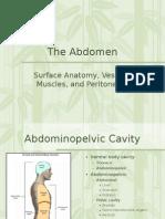 Abdomen and Cavity Grays