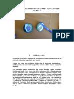 631recomendaciones Tecnicas Cultivo Aguacate