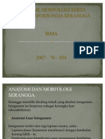 Anatomi, Morfologi Serta Metamorfosis Pada Serangga