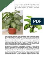 planta_venenosa
