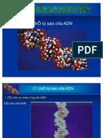 Co Che Tu Sao Cua ADN (Acid Nucleic & Protein)