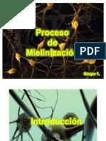 proceso de mielinizacion