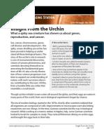 Insight from Urchin