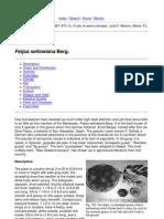 Feijoa (Purdue University)PDF