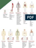 Sistemas Del Cuerpo y Las Plantas