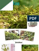 briofita -pratica