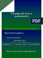 1-Fisiologia Del Arroz Marassi