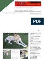 GUAU 2011-07-30 Desafio Guau Como Adoptar a Un Husky Sin Renunciar en El Intento