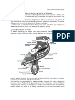 Anatomia y Fisiologia Aparato Re Product Or