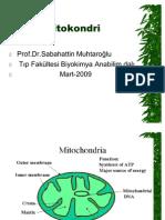 mitokoniri-yeni mito