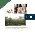 camu camu fruta nativa del peru