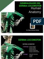 Locomotor Anatomy